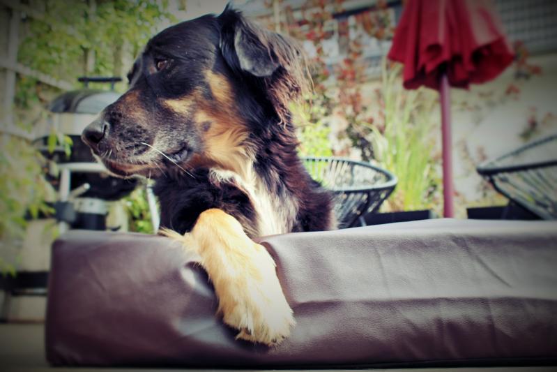 vorne 2 - Das hygienische Hundebett