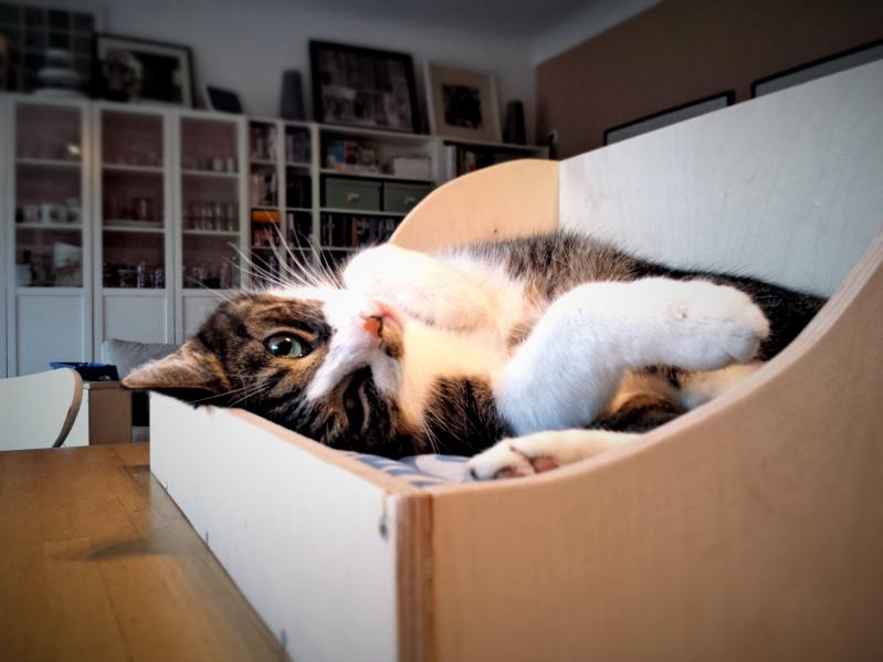 kiste - Twercs - Projekt 3 Katzenbett