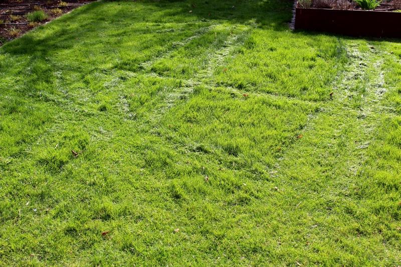 maehung 1 - Worx Landroid Rasen-Mähroboter