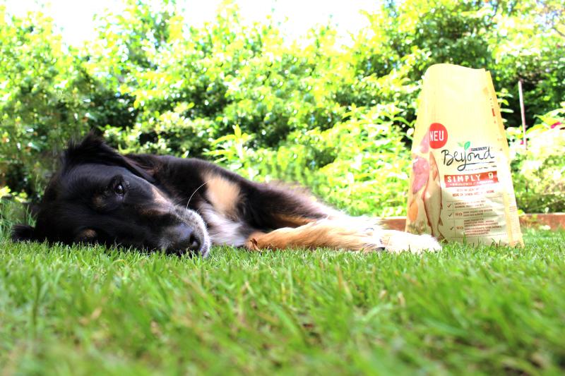 lieg2  - Purina Beyond Hundefutter