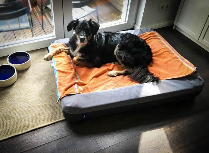 Casperhandtuchhandtuch - Casper Hundebett & Gewinnspiel