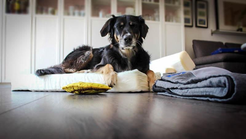 Casperohne bezugohne bezug - Casper Hundebett & Gewinnspiel