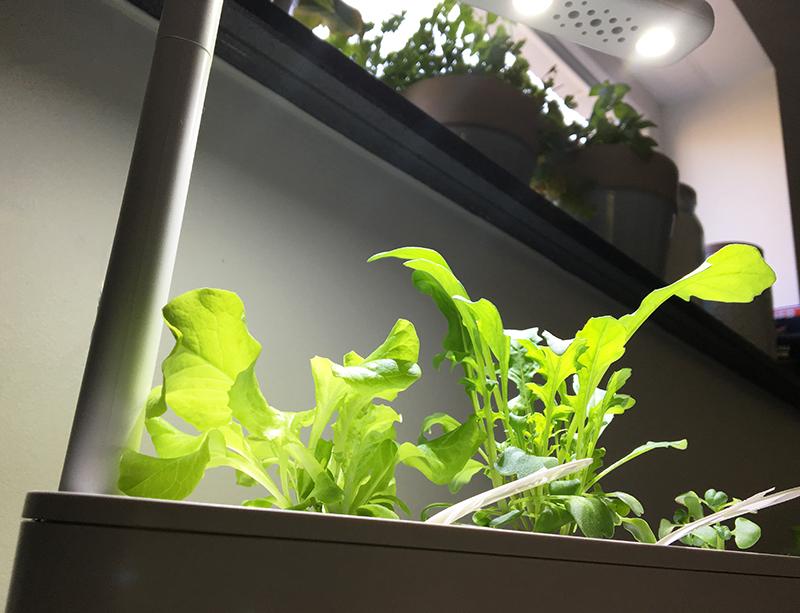 fensterbrett - Click & Grow Smart Garden von emsa