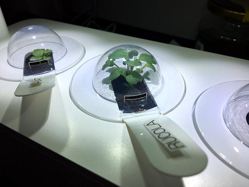 hauben - Click & Grow Smart Garden von emsa