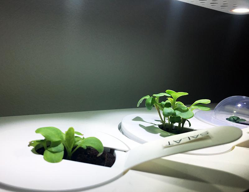 wachsen - Click & Grow Smart Garden von emsa