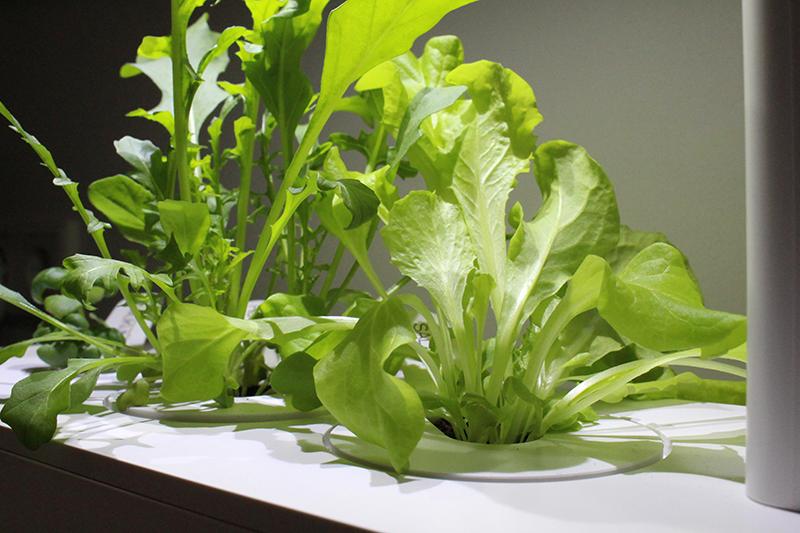 wucher - Click & Grow Smart Garden von emsa
