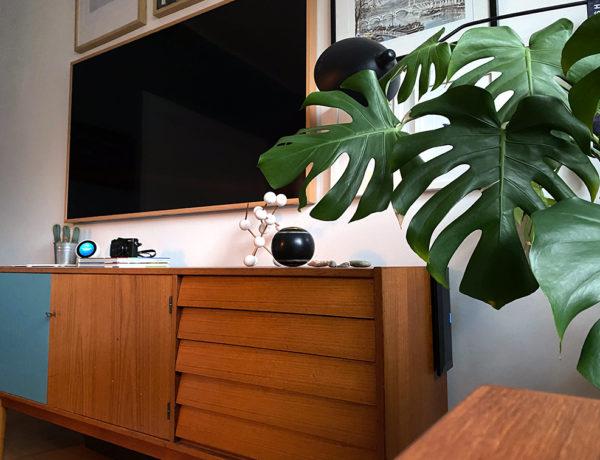 pflanze 600x460 - Die Top 5 Einrichtungstrends 2021
